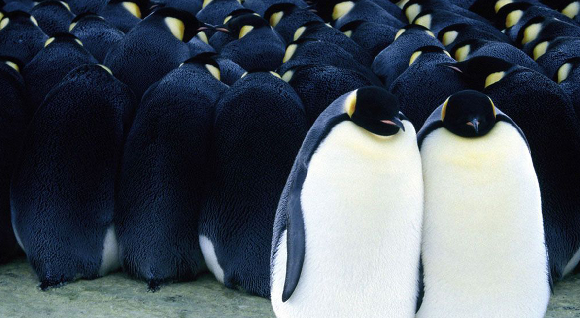 7. A Marcha dos Pinguins